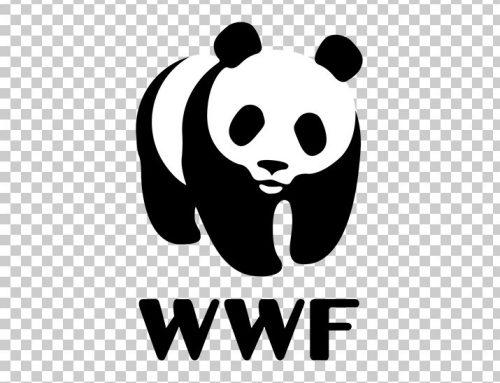 WWF: Beyond Plastics Online Training Program